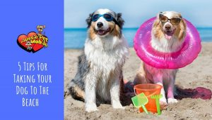5 Tips For Taking Your Dog To The Beach